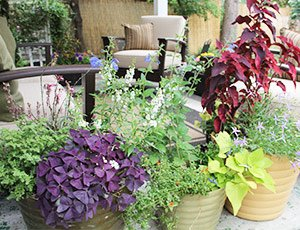 Residential Potted Plants